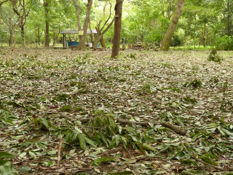 地面を覆う落枝