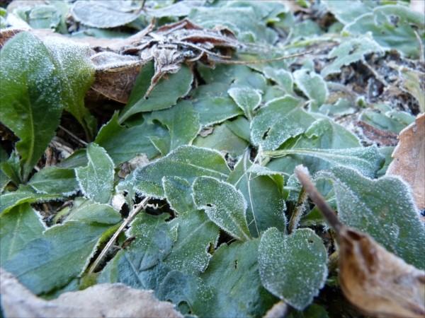 仕事の開始時でも日陰にはまだ霜が残る