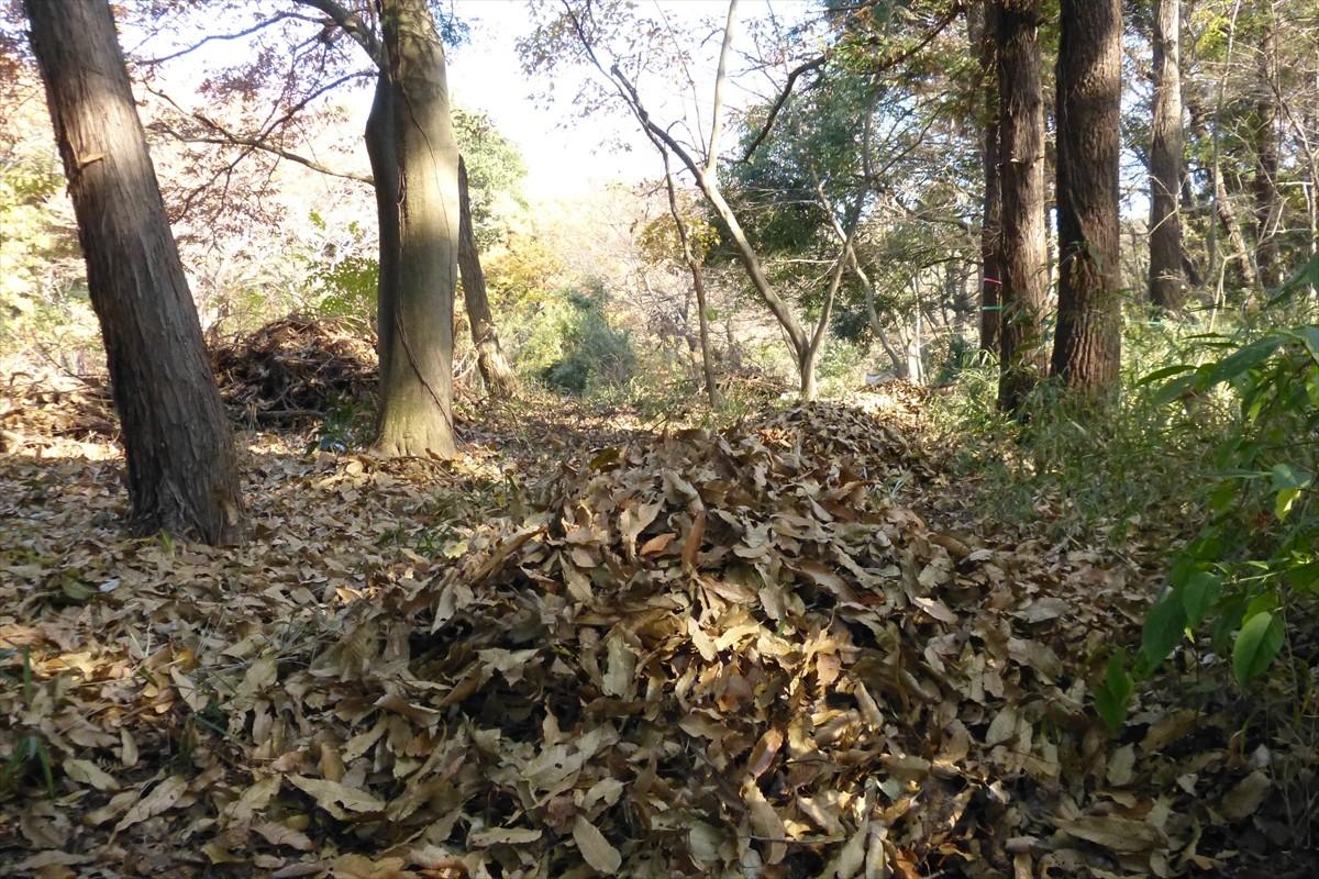 かき集めた落ち葉の小山が点々と