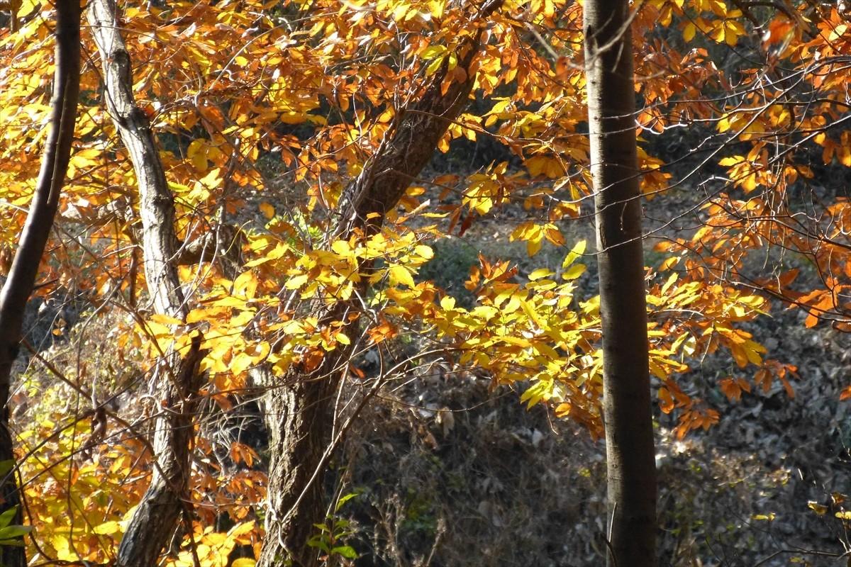 頭上にはコナラの葉がまだたっぷり着いています」