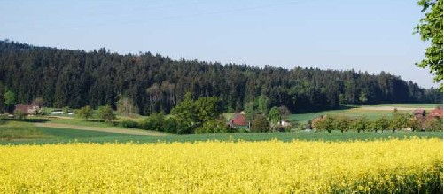 Obersteckholz