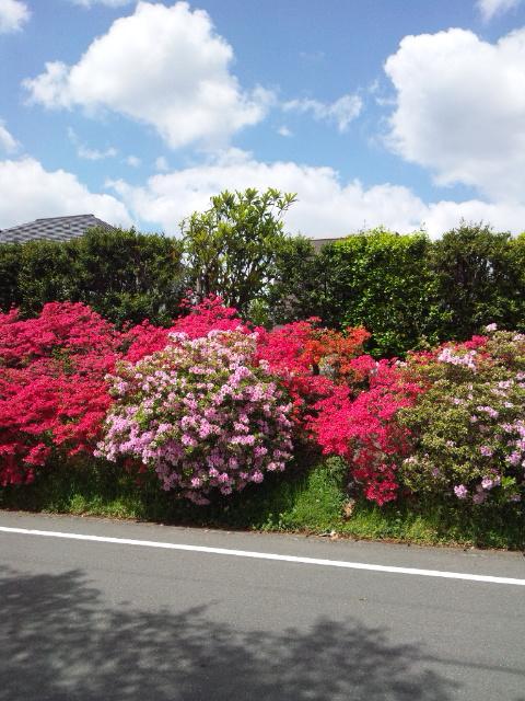 学校前の植栽です。とくに意味はなし。綺麗だったので撮りました。。。