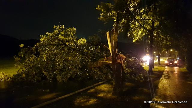 Umgefallener Baum auf  die Oberfeldstrasse
