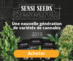 sensiseeds research