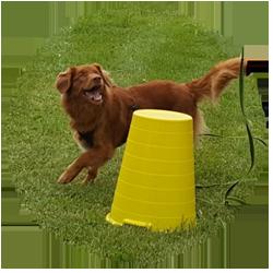 Hundetraining, Kurs Hund, Spass, Beschäftigung, Hund, Lernen