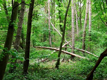 Natürliche Landschaft