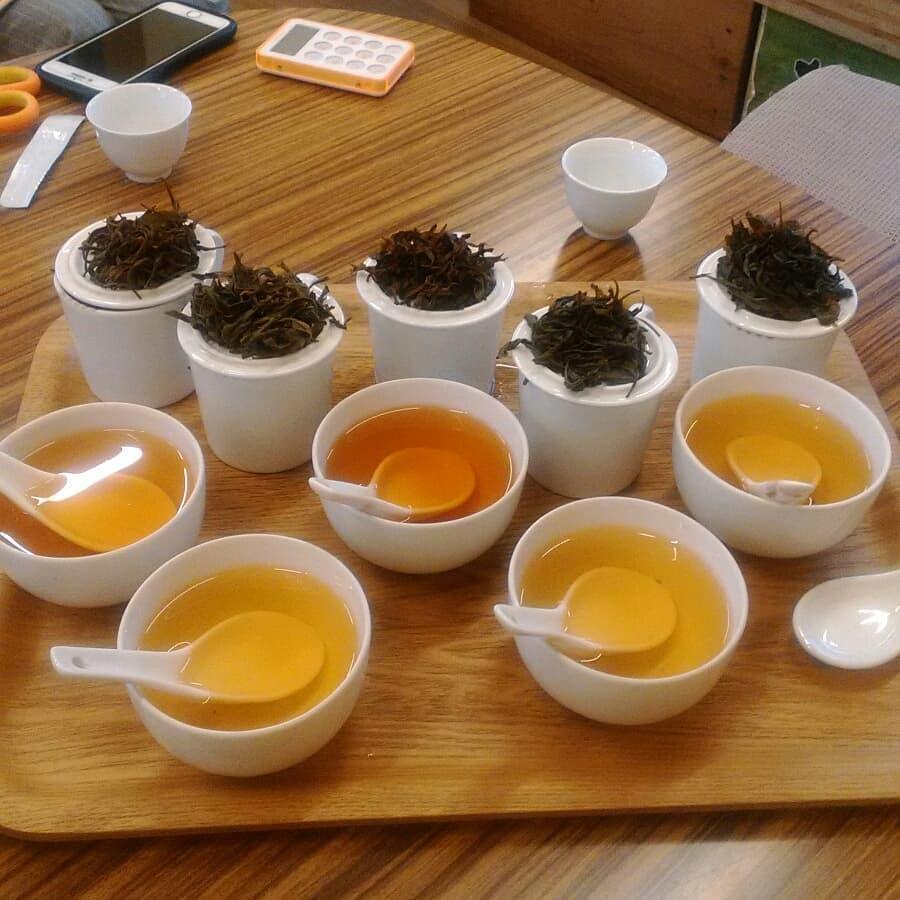 いずみ、在来種、飲み比べ 吉田茶園