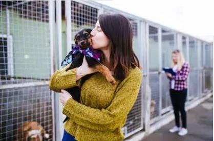 Adoption d'un chien dans un refuge
