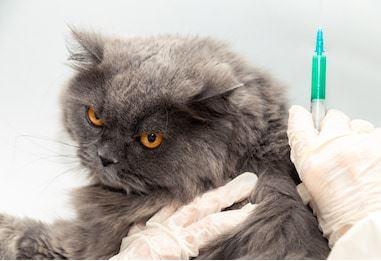 N'oubliez pas de faire vacciner votre chien ou votre chat