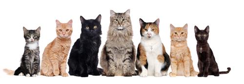 Vermifuger les chats dès qu'ils sont adultes (au-delà de six mois)
