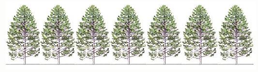 きとぷらすは、枕、サシェ、木の壁など、木のデザインに取り組み、日本の安心安全な木を暮らしに取り入れることを目指します
