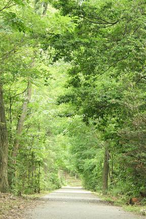森のサシェ(香り)でミニ森林浴!デスクの上において森の香りを嗅ぐことでリラックス作用!