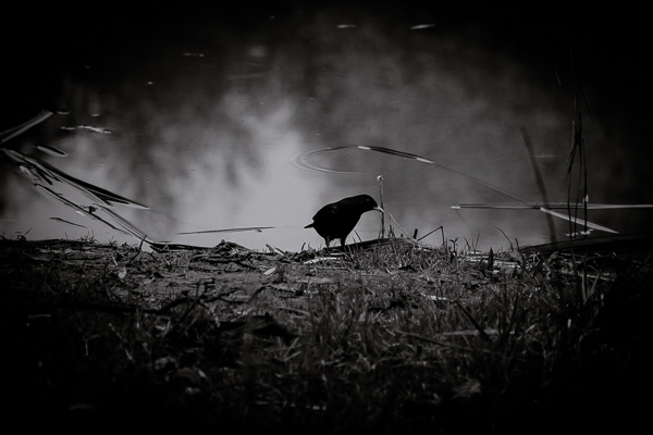Dark Series