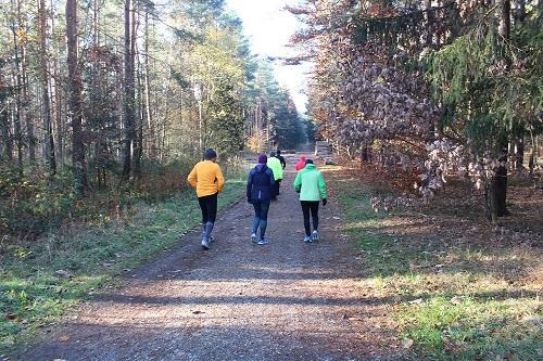 Warum ist das Laufen im Wald so gesund? Teil 2 von 2