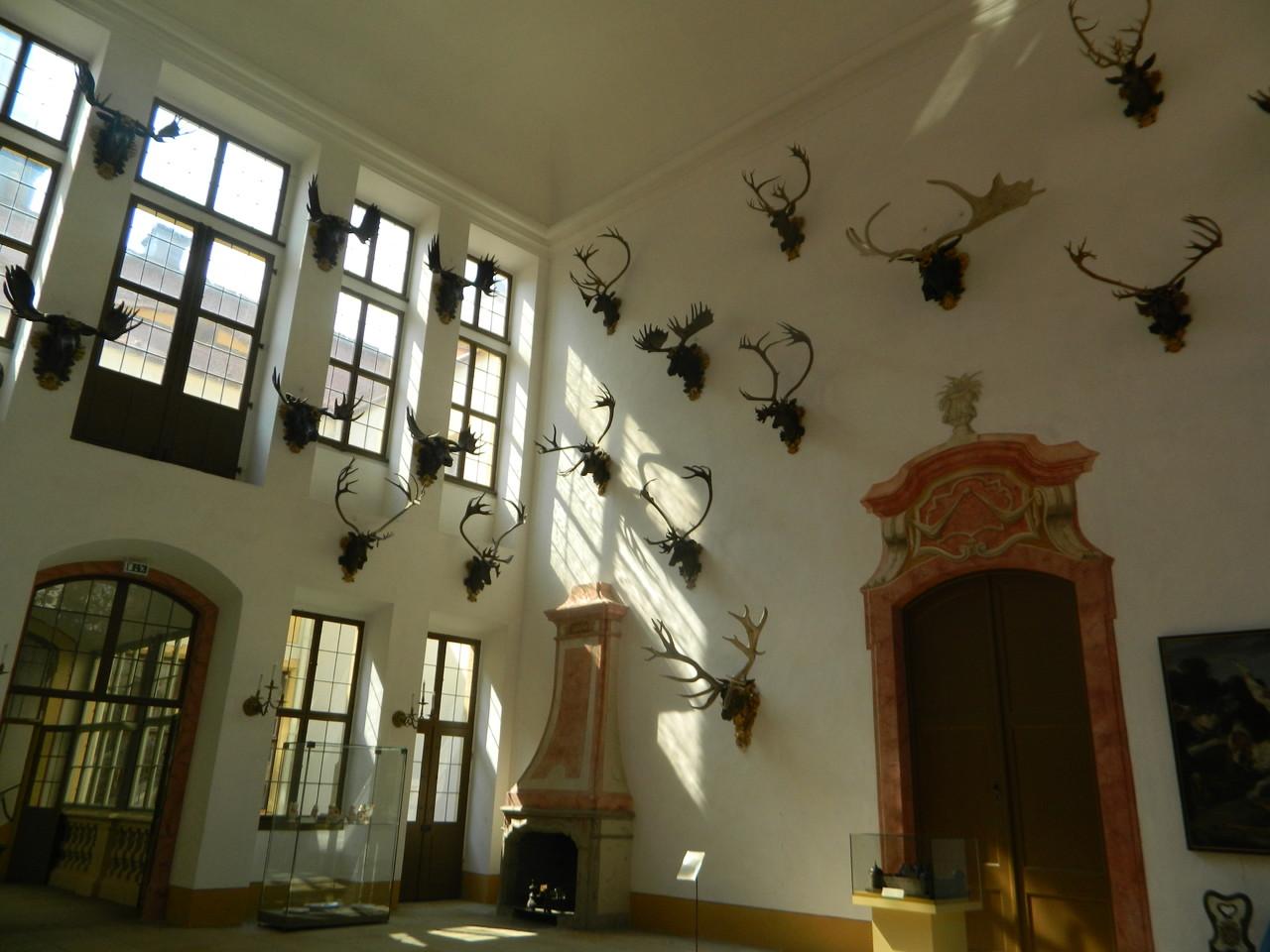 Ein Teil der Gehörnsammlung in Schloß Moritzburg