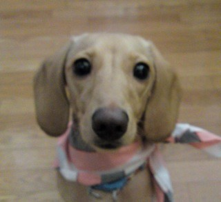 レオくん    2009年7月26日 犬との暮らし方教室 修了しました