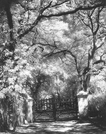 Meher Gates - Photo taken by Beth Ganz