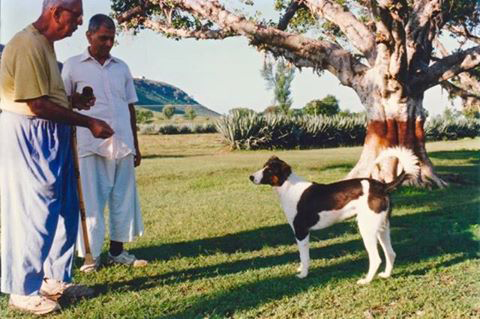 Meherwan with his brother Eruch ( left ) with a dog at Meherazad, India