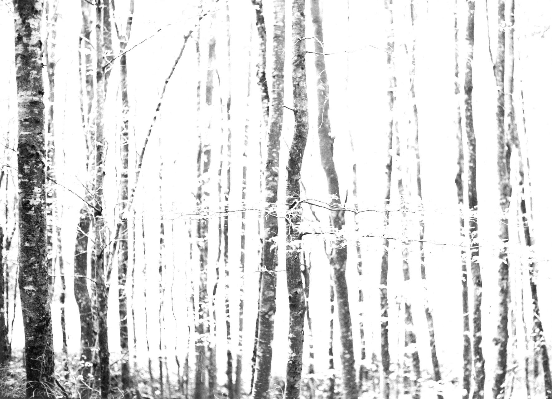 """""""Landschaft"""", Mannheim, Anfang 1960er Jahre"""