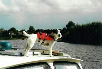 Als Bootshund