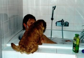 Norfolk Terrier müssen alles sehen und wissen