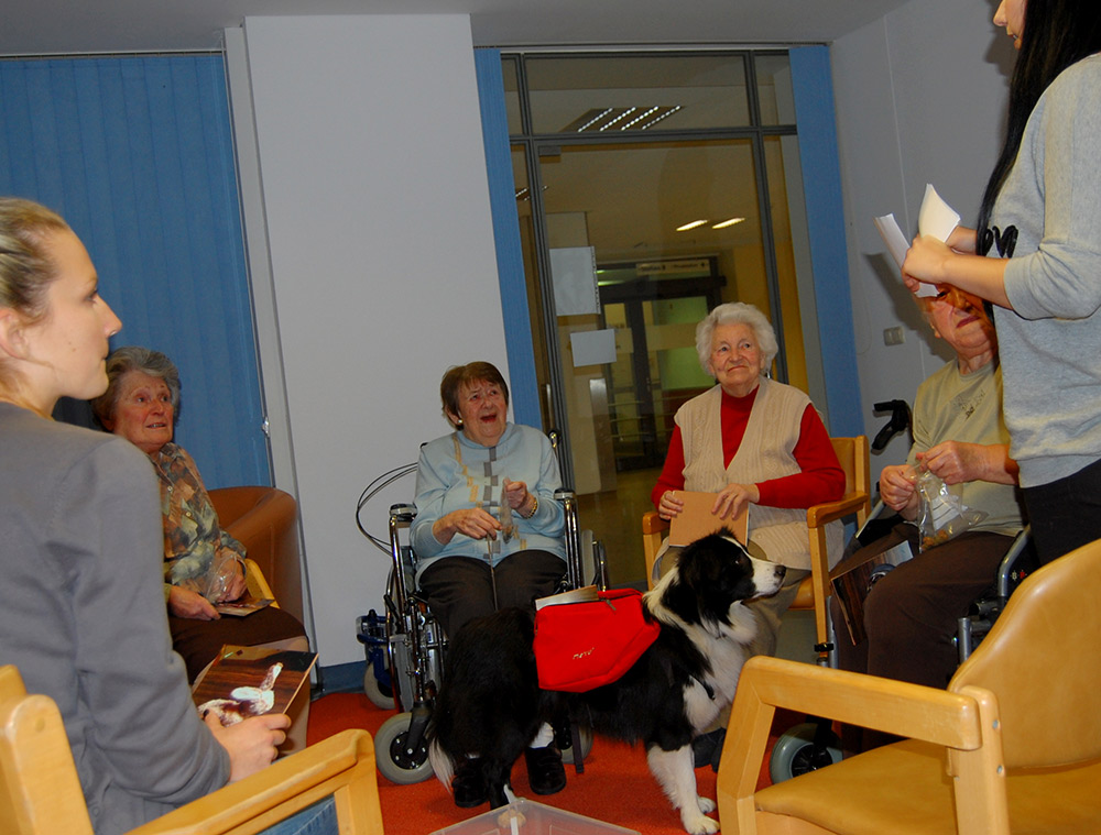 Therapie Hund Australian Shepherd