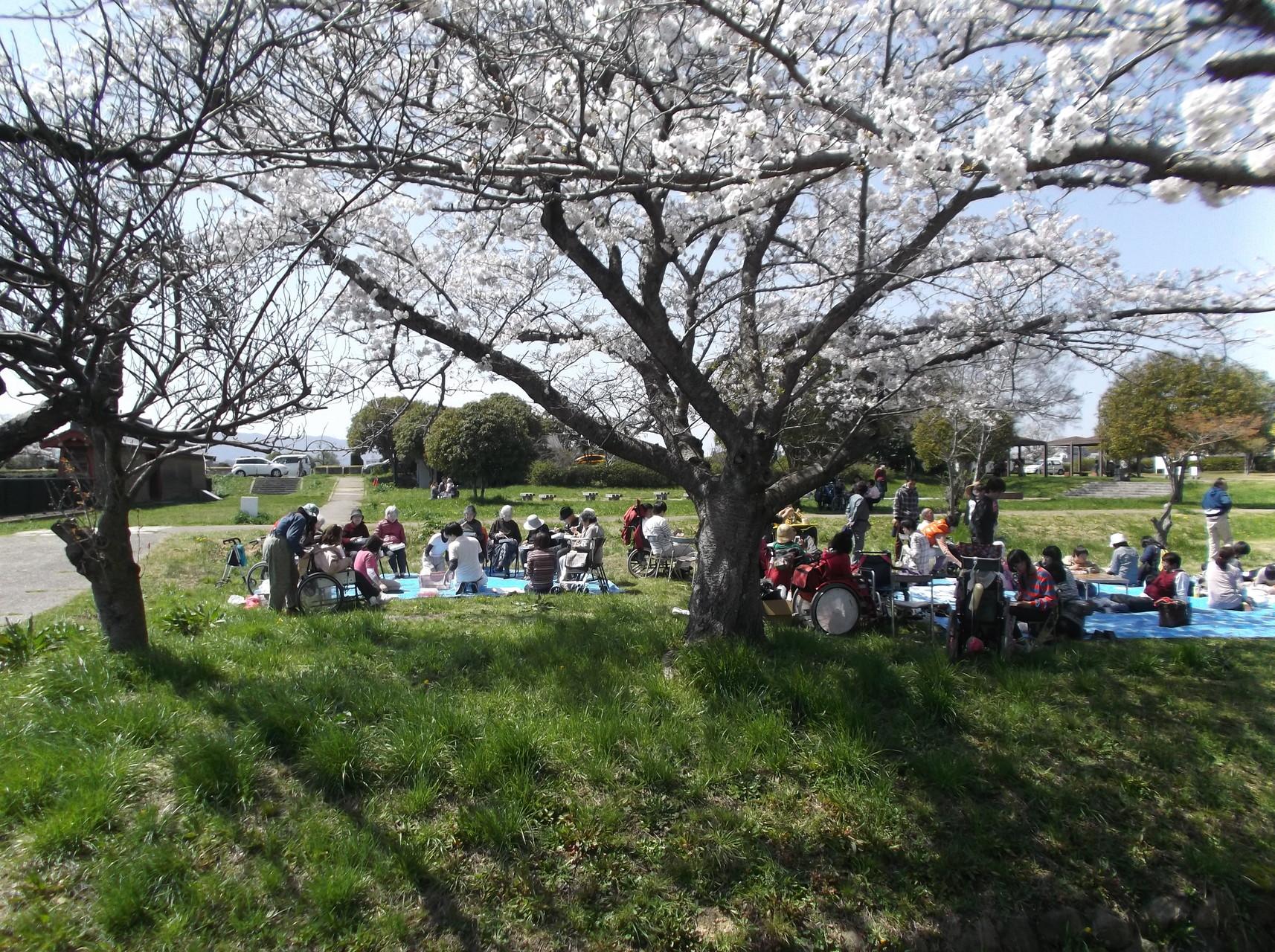 お花見桜の下
