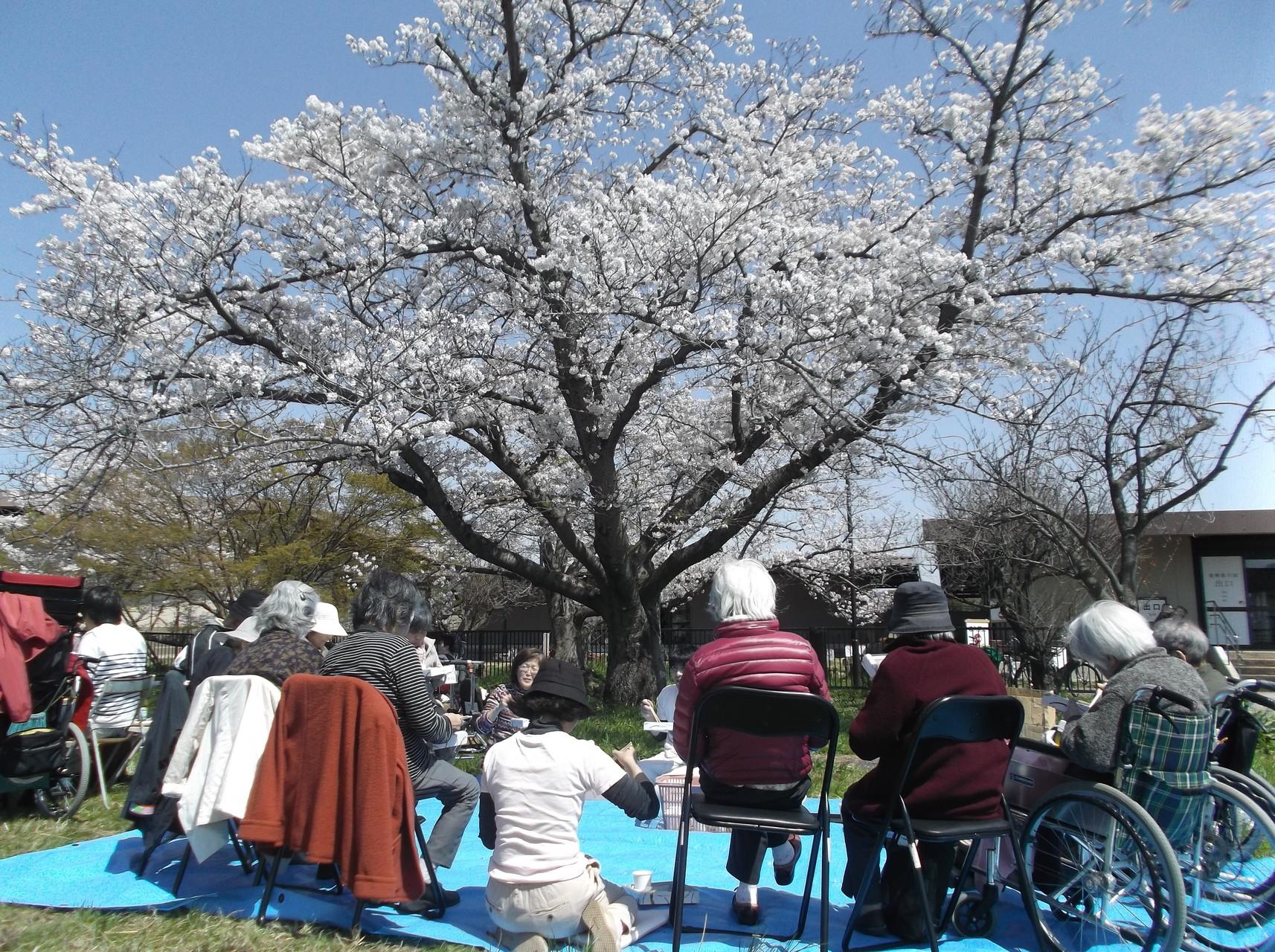 お花見桜を見上げて