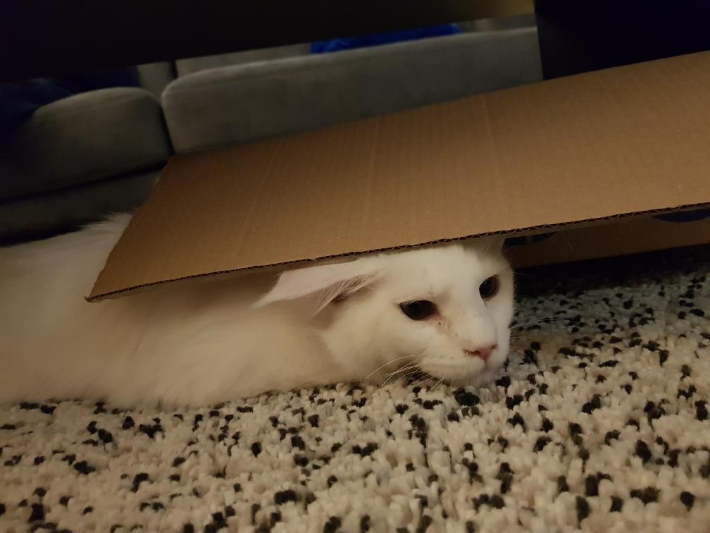 Verstoppen onder de flap van de kartonnen doos = je van het!