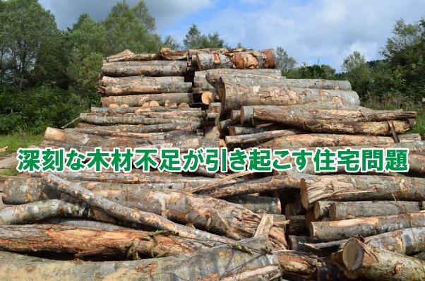 木材不足が引き起こす。なぬー!の住宅問題【府中市の不動産屋さん】
