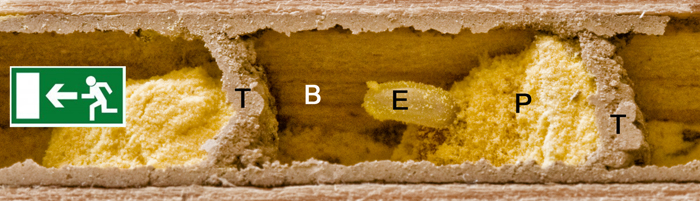 Brutzelle Ei Pollenkuchen Nektar Beobachtungsnistkasten Entwicklung Mauerbiene Lehmwände