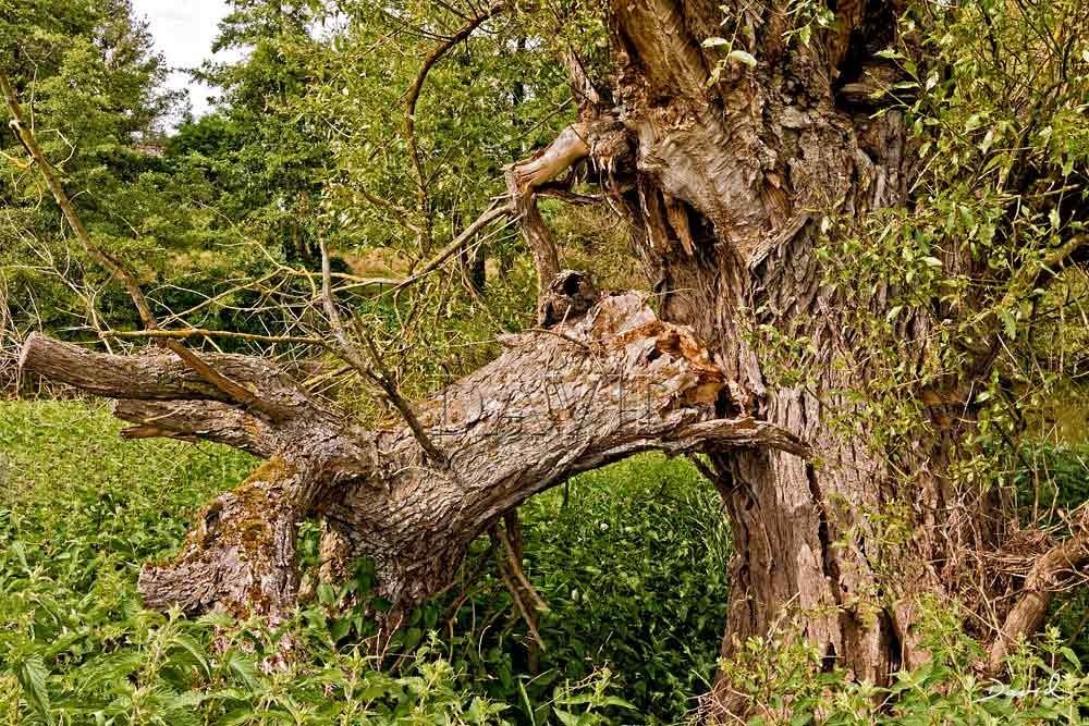 Totholz Baumhöhle Stammhöhle