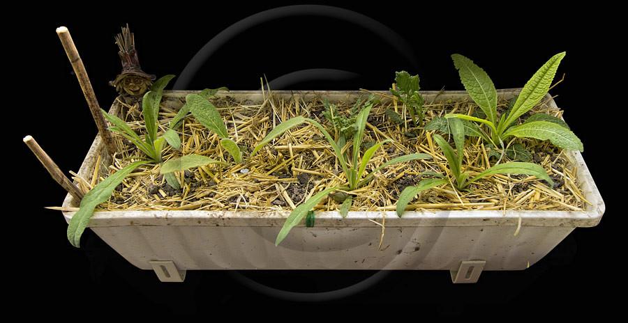 04.05.13: Immerhin schon ansatzweise als Pflanzen erkennbar