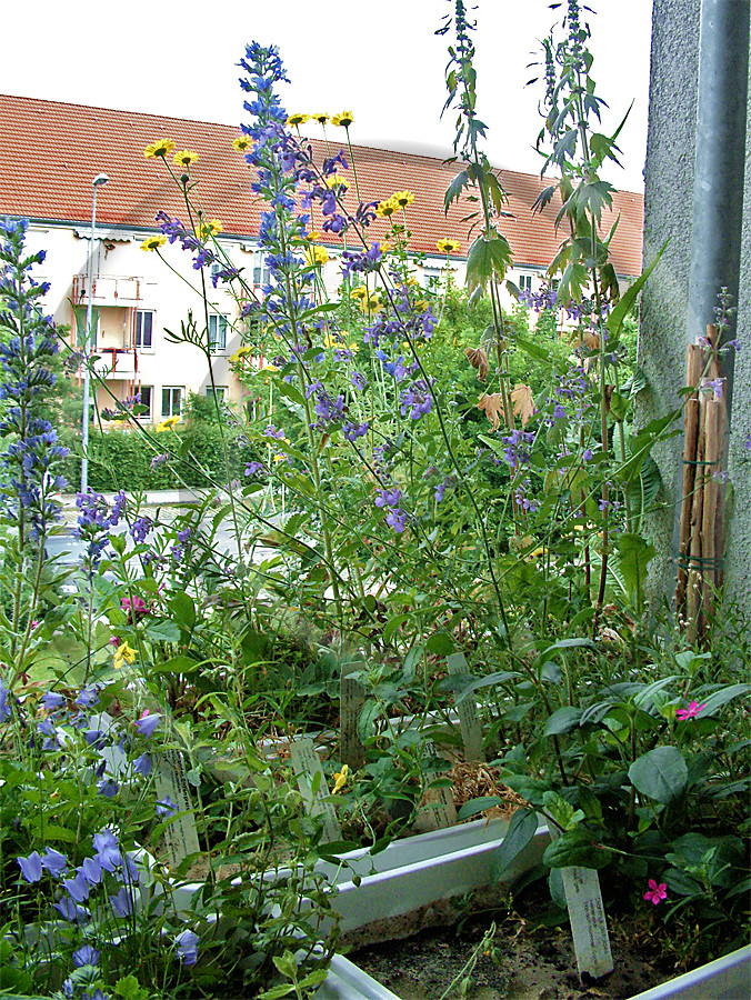 Naturgartenbalkon Balkon Balkonkasten Wildpflanzen wildlife garden balcony native plants balcony through