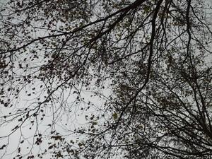 Die Bäume verlieren ihre Blätter, die im Frühling wieder neu wachsen.