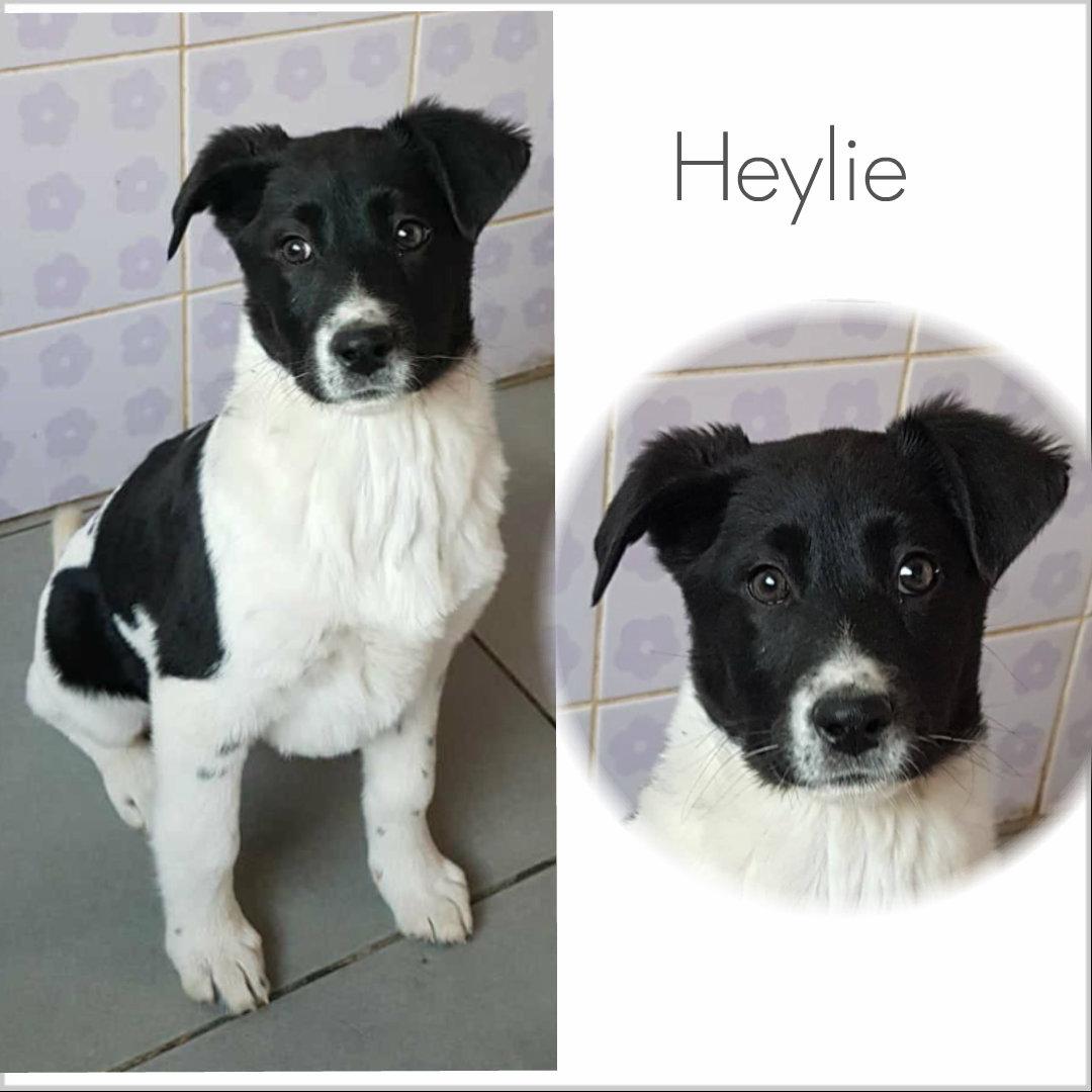 Heylie
