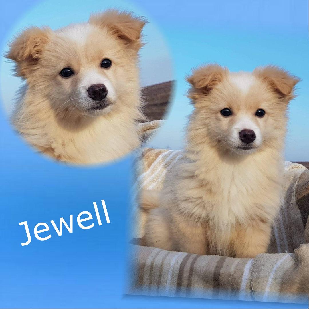 Jewell