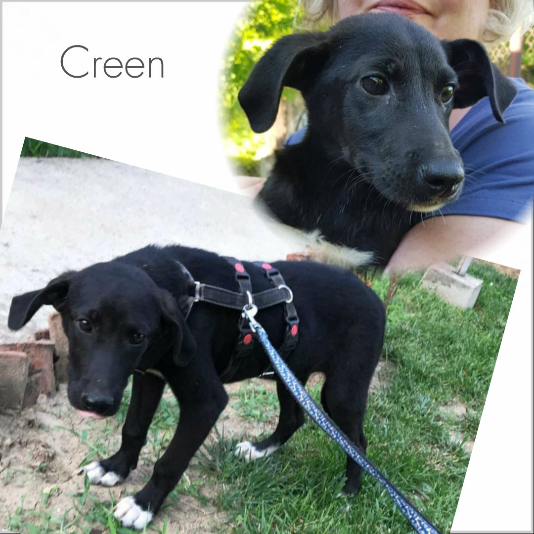 Creen