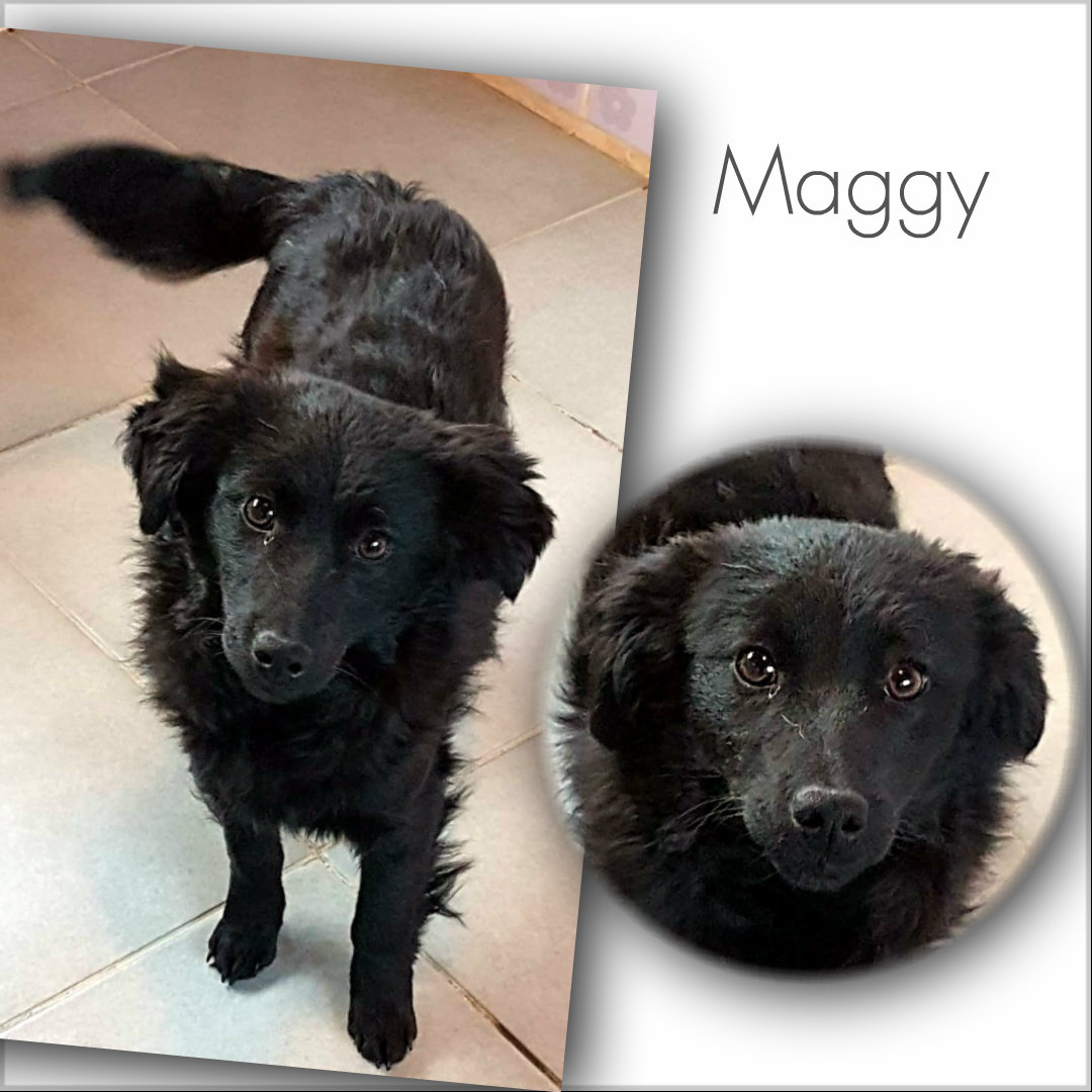 Maggy