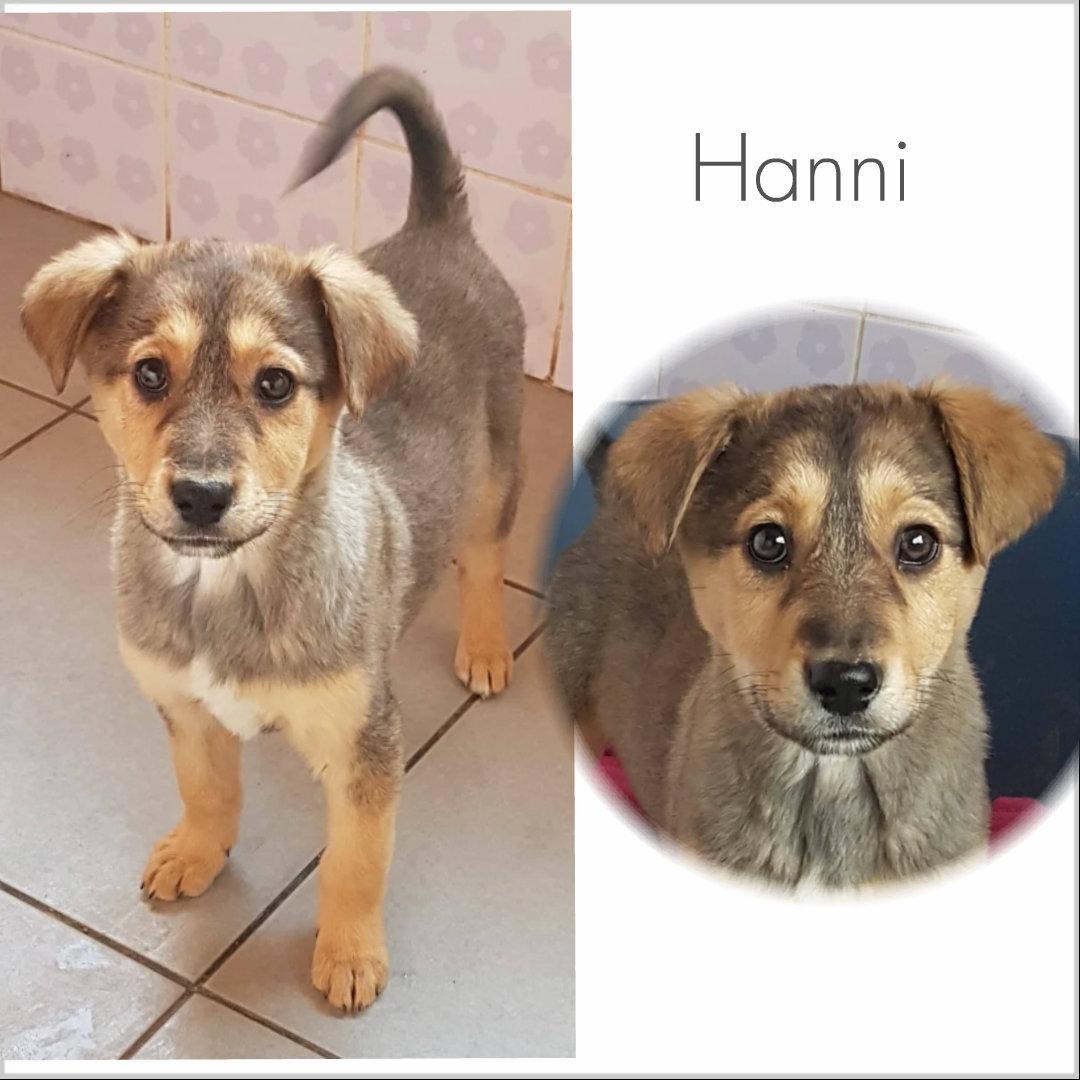 Hanni