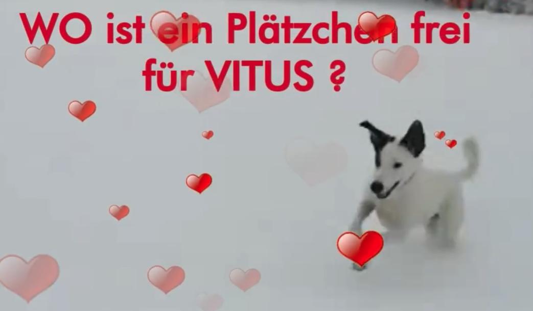 Vitus Video