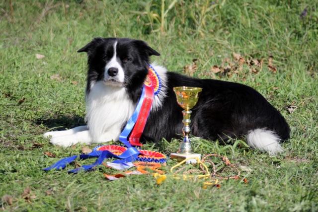 Sam  erlangte die Titel Rumänischer Champion & Rumänischer Grand Champion.....und er ist nun Internationaler Champion