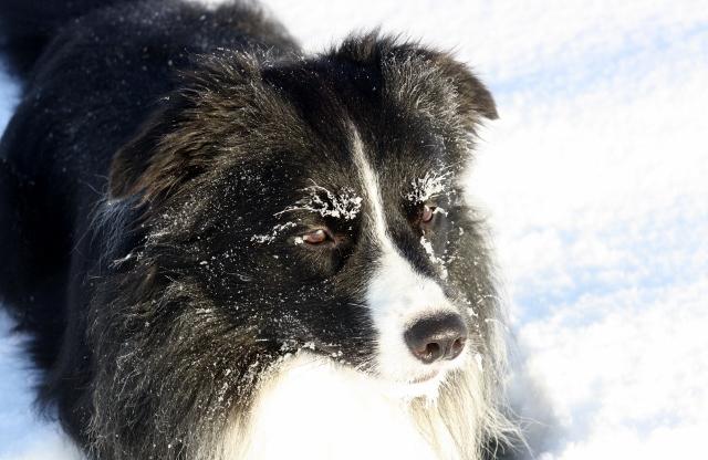 Ein Bild von Jack 2012.....du lebst in uns und wir tragen dich immer in unserem Herzen Giacomo