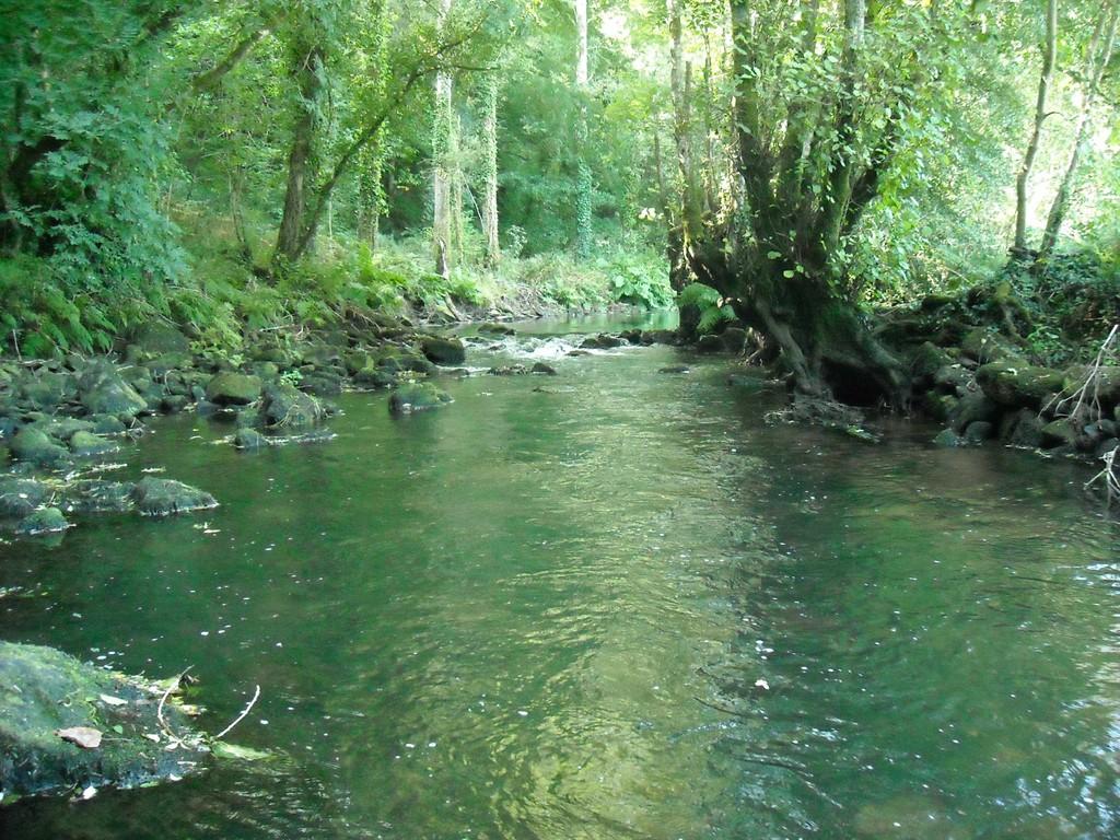 La rivière du Steir à deux pas du gîte