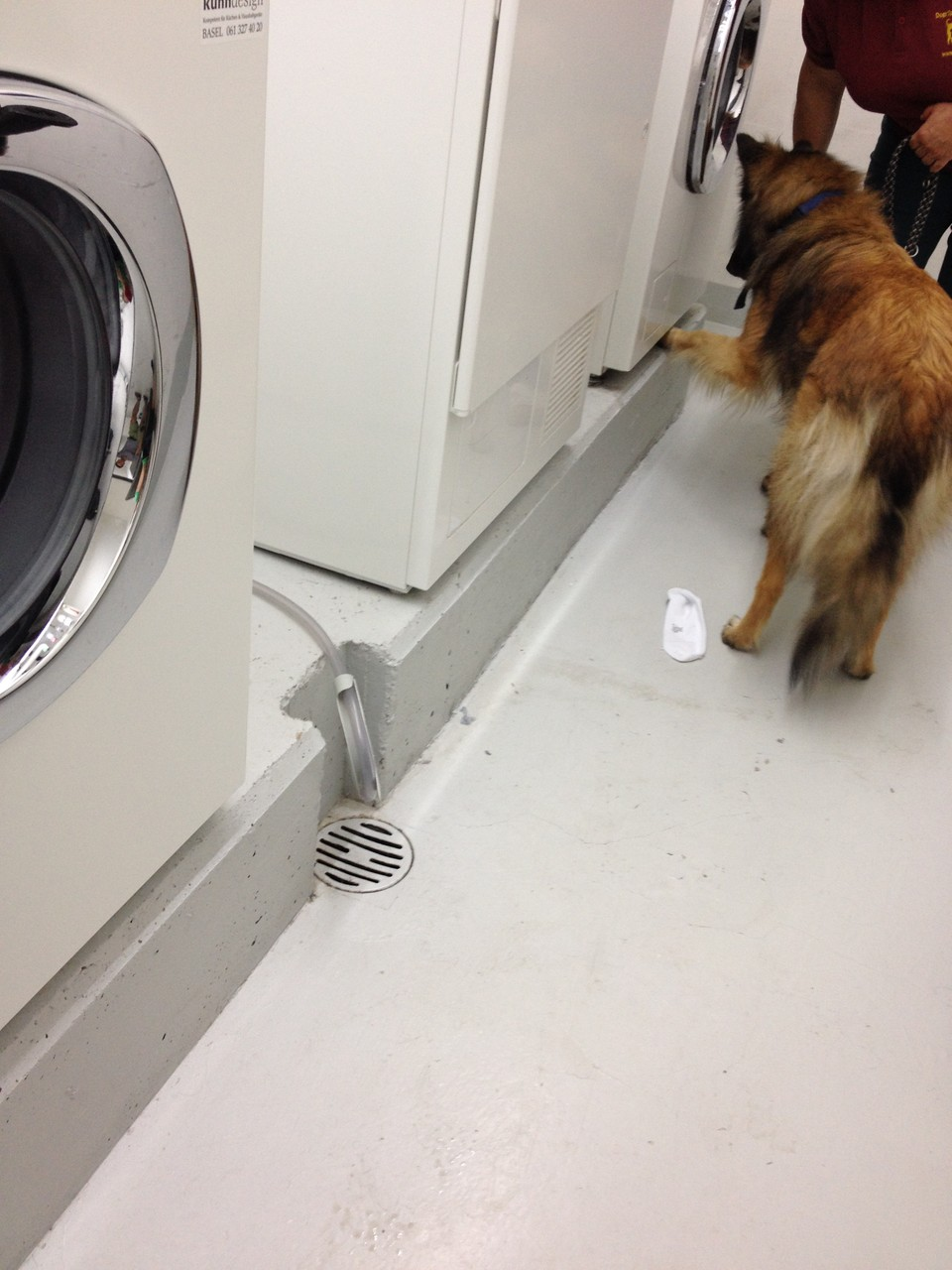 Y'Chaya zeigt einen Wanzenbefall UNTER der Waschmaschine an.