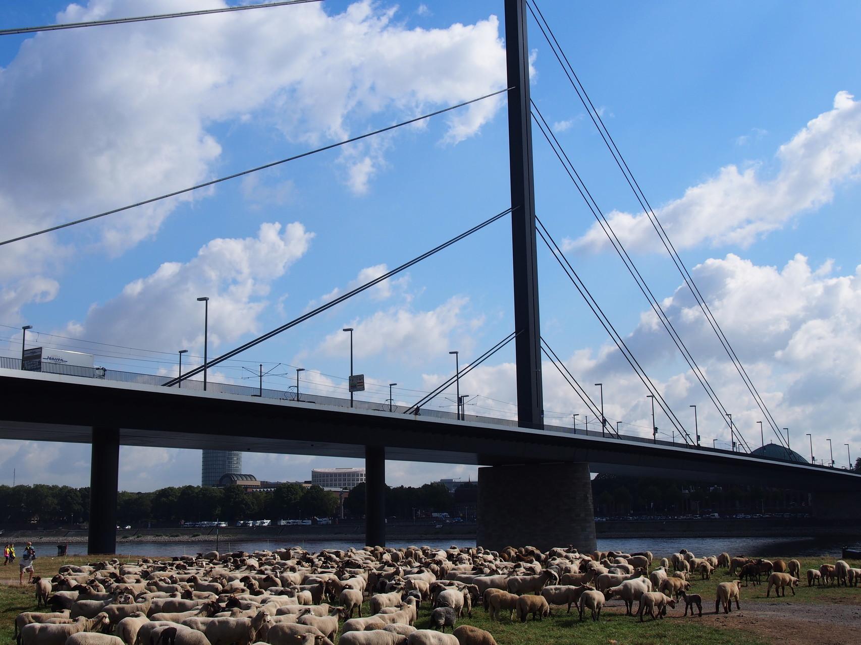 市内から高級住宅街に繋ぐ橋「オーバーカッセラーブリュッケ」