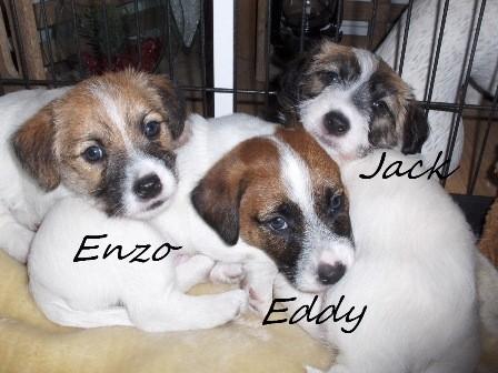 Eddy, Enzo en Jack 5,5 weken oud