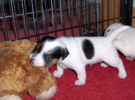 Xandro Joe, 3 weken oud