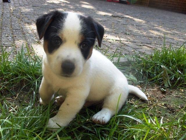 Robinson 6 weken oud