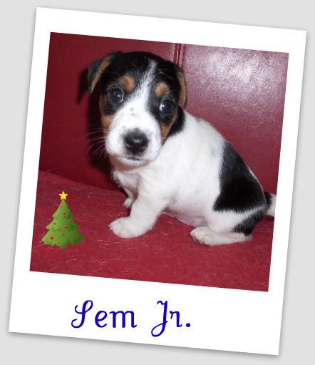 Sem Jr. 5 weken oud